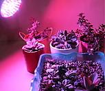 다육이 월동준비 필수품/다육이 UV살균기능 강화/식물생장 LED등 80W/식물공장등급 초강력 인공태양 