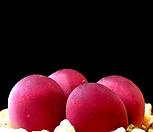 리톱스 루비씨앗 (20립) /리톱스씨앗|