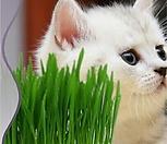 NEW캣그라스/고양이 풀 뜯어 먹는 소리다냥?|