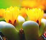 리톱스 미어리 믹스 씨앗 (30립) /리톱스씨앗|