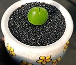 기배윰 크립토포디윰(수입)-13|Gibbaeum cryptopodium