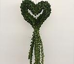 밀런하트 디시디아 디스키디아 공중식물 걸이시물 에어플랜트 행잉플랜트|
