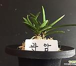 관암/난/나라아트/동양란/부귀란/풍란/공기정화식물/나라아트|