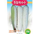흰찰옥수수(씨앗)|