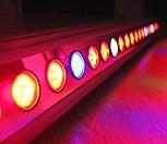 테라(Tera) 다육이 LED|