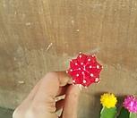 미니선인장 {S} 칼라선인장/1개 선택(빨강/노랑/핑크)/블루버드/앙증맞고 귀여운 미니 선인장/선인장/다육식물/공기정화식물/전자파차단효과|