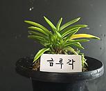 금루각/난/나라아트/동양란/부귀란/풍란/공기정화식물|
