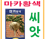 생활백화점 씨앗 채소씨앗 마카(황색) 