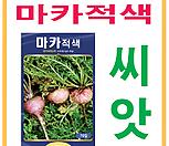 생활백화점 씨앗 채소씨앗 마카(적색) 