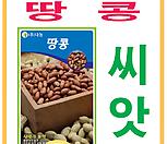 생활백화점 씨앗 채소씨앗 땅콩씨앗 