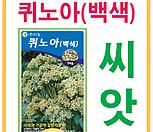 생활백화점 씨앗 채소씨앗 퀴노아씨앗(백색) 