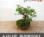 소사나무 수제 완성분 0063|