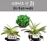 난 모음/난/꽃/동양란/서양란/공기정화식물/풍란/부귀란/야생란/화분/나라아트|