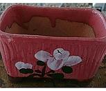 긴사각칼라 분홍|