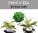 난 모음2/난/꽃/동양란/서양란/공기정화식물/풍란/부귀란/야생란/화분/나라아트|