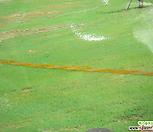 한국잔디35개국내100%생잔디재배 산소 정원 각종 시설보강|