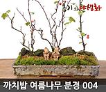 까치밥 여름나무 분경 완성작 004|