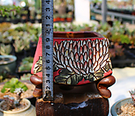 산토방 수제화분 1 Handmade Flower pot