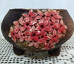 수제화분111901|Handmade Flower pot