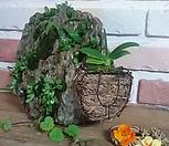 석부작정원(콩짜개&그래스내피분에 풍란)|