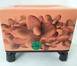 우암도예수제분 1-117|Handmade Flower pot