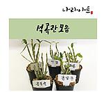 석곡란모음/난/꽃/동양란/서양란/공기정화식물/풍란/부귀란/야생란/화분/나라아트|