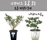 묘목 모음/묘목/꽃/꽃대/향기/화분/식물/나라아트 