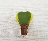 무늬하트호야 Hoya carnosa