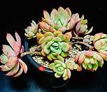 정원hy 10|