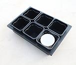 물결플분3호(9cm)6개+삽목상자 중형 배수有(배수가능)세트|