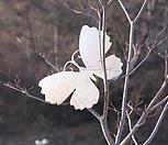 스틸데코 나비 (정원장식, 조형물, 정원소품, 정원꾸미기, 홈가드닝)|Echeveria still