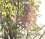 스틸데코 호랑나비 (정원장식, 조형물, 정원소품, 정원꾸미기, 홈가드닝)|Echeveria still