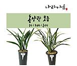 동양란 모음/난/꽃/동양란/서양란/공기정화식물/풍란/부귀란/야생란/화분/나라아트|