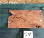 박쥐란헌팅트로피,에어플랜트용 통나무슬라이스0130xpsp-3|