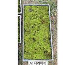 <4월 초특가 12,900원>생이끼(서리이끼,비단이끼)-석부작, 분재, 실내조경,미니정원,공기청정화분 등|