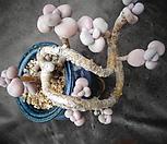 아메치스(한몸)묵은둥이|Graptopetalum amethystinum
