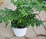해피트리 대박나무02|happy tree
