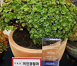 (적극추천)원종에보니슈퍼클론철화(미국수입 자댄상품판매)-29