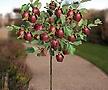 루비에스 왜성 미니사과♥왜성사과♥당도높은 신품종 사과나무♥미니 사과 애기사과