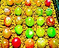 生石花믹스种子(100립)-280여종이섞여있어요/生石花种子|Lithops