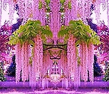 핑크아이스 위스테리아 특품♥유럽 직수입♥몽환적인 빛깔에 반하실 준비 됐나요?