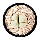 세척된 핑크사(200g, 세립2~3mm)/핑크색모래/다육용/리톱스용/화장토용