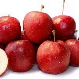 수형완성 알프스오토메 미니사과 성목 단품♥왜성사과♥수형 알프스 애기사과 사과나무 묘목 왜성|