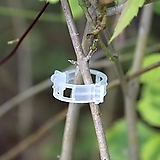 가지 결속 클립 20개 세트♥줄기와 가지를 손상없이 깔끔하게 고정해 줍니다.♥수형 관리|