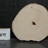 통나무슬라이스(박쥐란헌팅트로피,기타diy용)0116xp15|