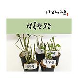 석곡란合并/난/꽃/동양란/서양란/공기정화식물/풍란/부귀란/野生란/花盆/나라아트|