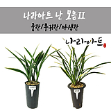 난合并2/난/꽃/동양란/서양란/공기정화식물/풍란/부귀란/野生란/花盆/나라아트|