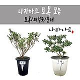 묘목 모음/묘목/꽃/꽃대/향기/화분/식물/나라아트|