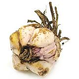 백합구근(코브라/핑크색꽃)|