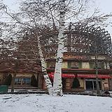 자작나무 (R3,R4,R5)|